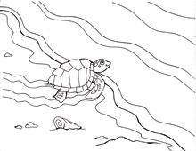 Coloring Pages Sea Turtles and the Quest to Nest WaterLife